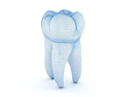 Morphology of First maxillary molar tooth. Wired 3d illustration