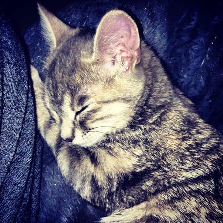 Kitten sleeping Stok Fotoğraf