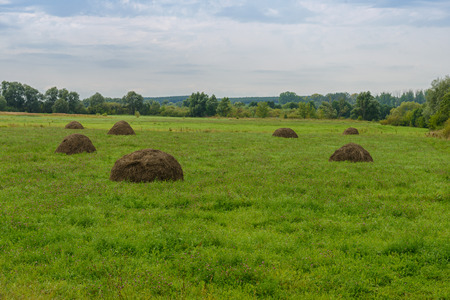 glade with haystacks in the wooded area