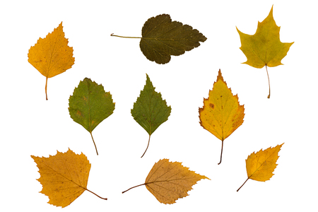 Dry green and brown leaves on a white background