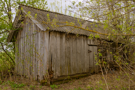 old wooden abandoned hut among trees on a cloudy spring day Фото со стока