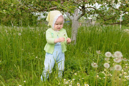little girl holding a dandelion and considering it in the garden