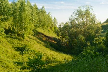 forest ravine overlooking the meadow in the summer evening Zdjęcie Seryjne