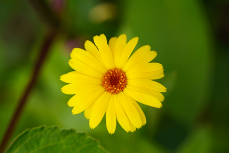 Bright yellow flower on a green background. View from above.