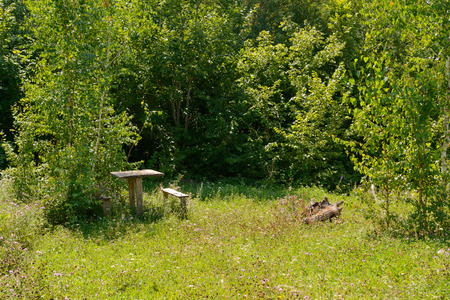 forest clearing with an old wooden table and benches on a sunny summer day