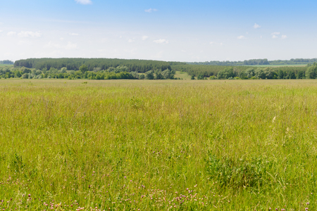 Summer landscape with green meadow and forest on the horizon