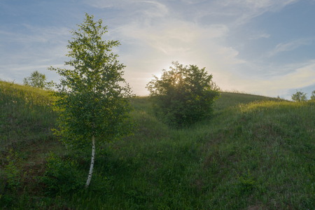 small trees on a green hillside at sunset summer day