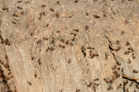 a lot of ants on the old rotten stump on a sunny spring day Zdjęcie Seryjne