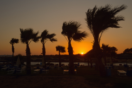 Sunset on the beach with sun loungers and palm trees