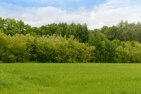 Summer landscape green field, forest and blue sky