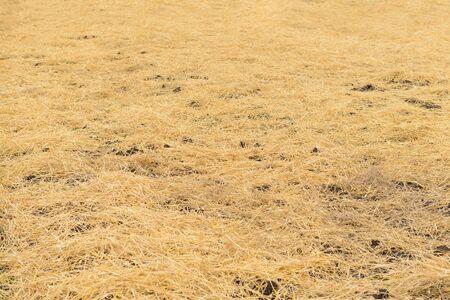 Dry straw lies on the ground with a solid carpet. Zdjęcie Seryjne