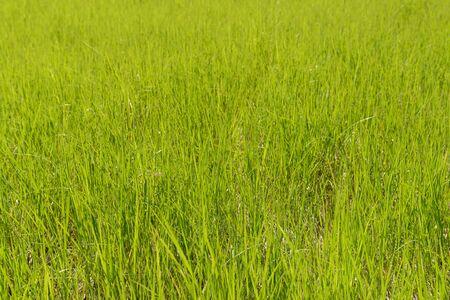 meadow with bright green grass on a sunny summer day Zdjęcie Seryjne
