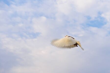 dove waving wings flying against the sky covered with clouds