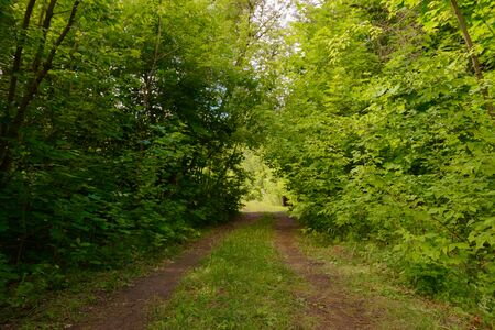 dirt road in a green summer forest