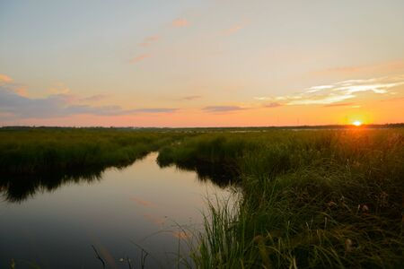 Summer sunset on a lake overgrown with reeds.