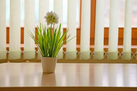 Artificial flower in a white pot on a table in front of a window with blinds Zdjęcie Seryjne