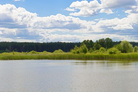 Summer landscape with a lake, a bank of overgrown reeds and a forest on the horizon