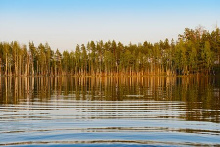 Evening summer landscape with forest lake. Water surface with reflection.