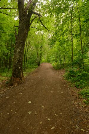 Forest path through bright green trees on a summer cloudy day