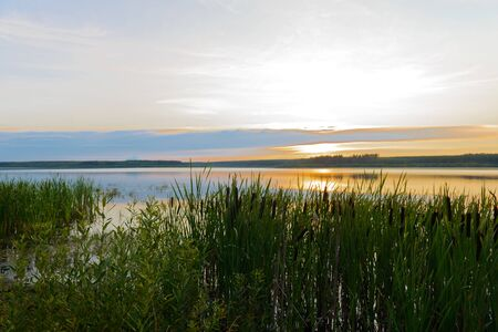 Evening summer landscape with a lake and overgrown with reeds shore Zdjęcie Seryjne