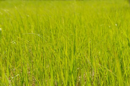 Photo of bright green grass in a summer meadow. Ground level photo.