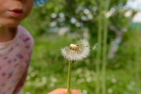 Little baby blowing on a dandelion in a summer garden