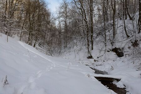 Winter forest covered with snow in a ravine with a river