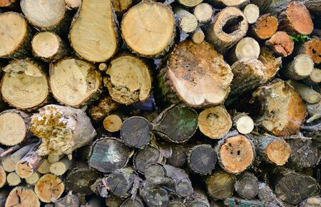 A pile of logs for firewood piled by a wall Banco de Imagens