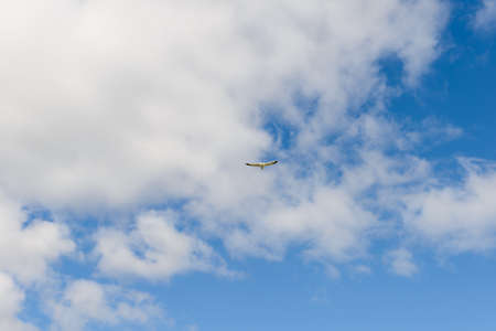 One seagull flies in the blue sky with clouds