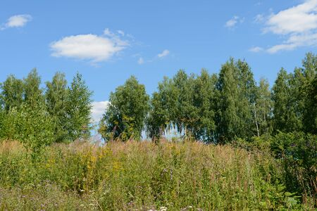Summer landscape with lush vegetation, trees and blue sky Banco de Imagens