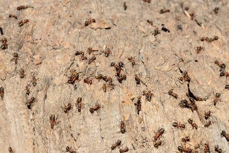 A lot of ants on an old rotten stump Banco de Imagens