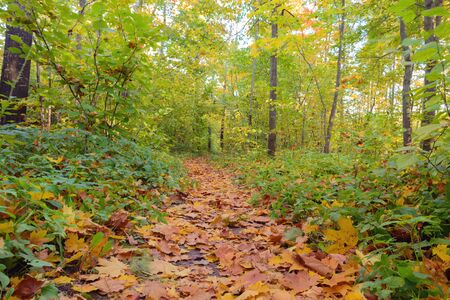 Fallen foliage path in the autumn forest