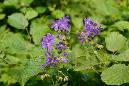 Little purple forest flowers in a green meadow
