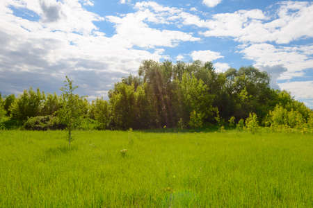 Summer landscape with a green clearing, trees and a blue sky with clouds
