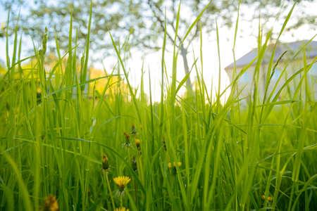 Green grass in the garden. Bottom view.