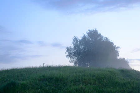 Evening summer landscape with a tree on a hill and fog 版權商用圖片