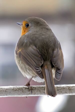 Robin is sitting on a branch. Stockfoto