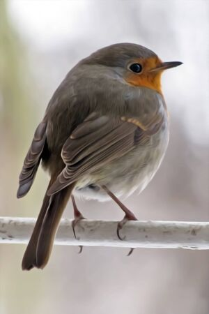 Robin sits on a branch and looks around.