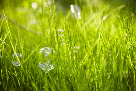 Nature  Background  Grass with soap bubbles  photo