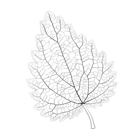 nettle: Isolated vector monochrome nettle leaf.