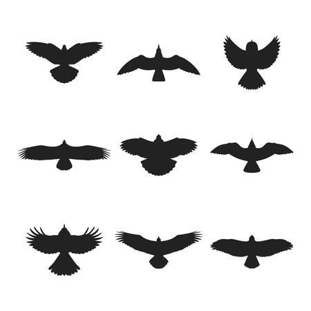pajaros volando: Pájaro de vuelo como paloma gorrión águila gaviota paloma o halcón siluetas establecidos