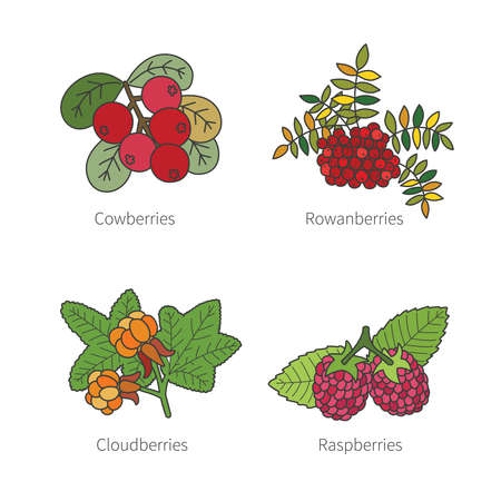 pied: Set of vector doodle pied berries like blueberries juniper cranberries crowberries isolated on white