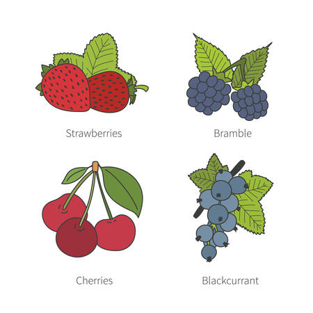 blue berry: Set of vector doodle pied berries like blueberries juniper cranberries crowberries isolated on white