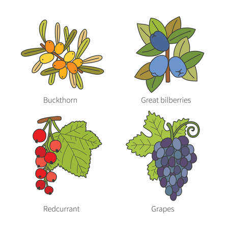 red currant: Set of vector doodle pied berries like blueberries juniper cranberries crowberries isolated on white