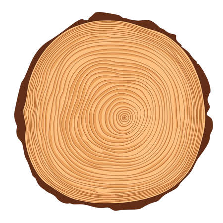 crosscut: Vector saw crosscut tree trunk with rings
