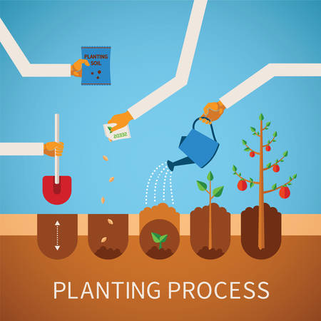 regando plantas: Vector calendario concepto infograf�a del proceso de plantaci�n en dise�o plano