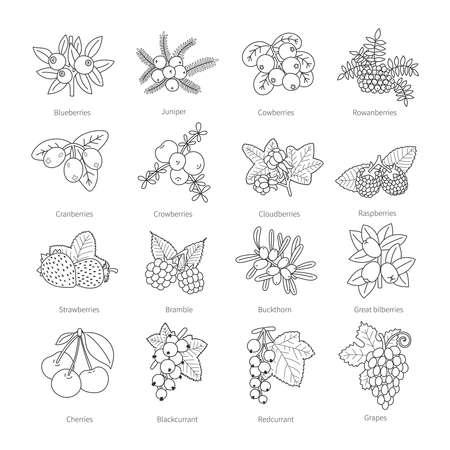 Set outline doodle pied Beeren isoliert auf weiß Vektorgrafik