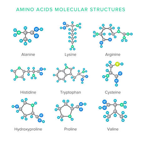 acids: Vector molecular structures of amino acids isolated on white set