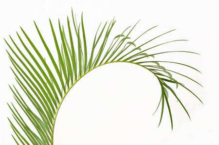 Rama de palmera Foto de archivo