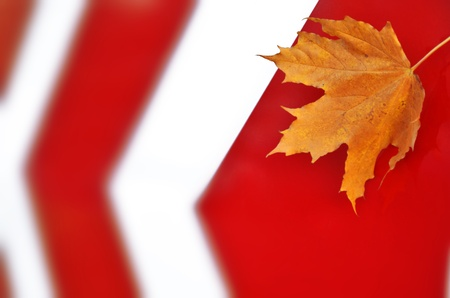 Maple leaf on the road sign photo